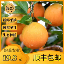 湖南湘et9斤整箱新rn当季手剥甜橙20应季大果包邮橙子10