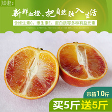 开州��f1纽荷尔柳橙16橙孕妇橙红心橙塔罗科橙玫瑰香