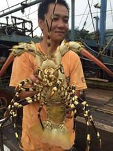 海之鲜fh大(小)龙虾 jy澳洲龙虾澳龙 花龙野生海捕鲜活龙虾2000g