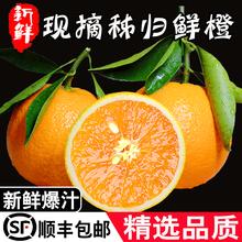 湖北秭fi夏橙子当季or摘新鲜酸甜橙5斤整箱10斤净9斤顺丰