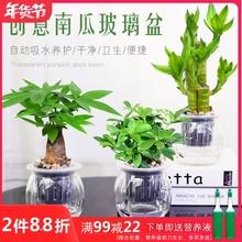 发财树fk萝办公室内sk面(小)盆栽栀子花九里香好养水培植物花卉