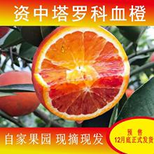 四川资fk塔罗科现摘sk橙子8斤孕妇宝宝当季新鲜水果包邮