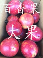 广西紫fo新鲜5斤包ty果香甜10点至22点广州发货