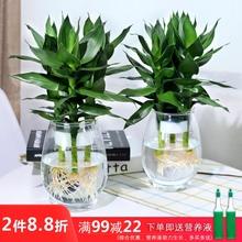 水培植fr玻璃瓶观音nc竹莲花竹办公室桌面净化空气(小)盆栽
