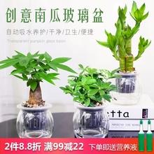 发财树gm萝办公室内hw面(小)盆栽栀子花九里香好养水培植物花卉