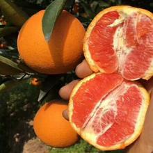 血橙当go新鲜时令水fw红肉橙子10斤甜赣南冰糖橙整箱现货