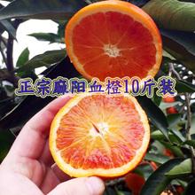 湖南麻gq冰糖橙正宗bi果10斤红心橙子红肉送礼盒雪橙应季