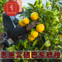 湖北恩gt三峡特产新pw巴东伦晚甜橙子现摘大果10斤包邮