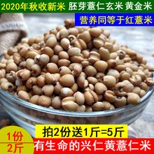 202gu新米贵州兴ie000克新鲜薏仁米(小)粒五谷米杂粮黄薏苡仁