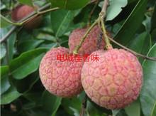 茂名特gu时令水果新re/乌叶新鲜现摘果园直发5斤