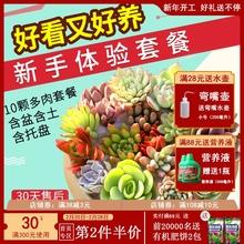 多肉植gu组合盆栽肉zy含盆带土多肉办公室内绿植盆栽花盆包邮