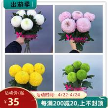 家庭瓶gy花 进口鲜uw 多色花 北京花卉市场发货