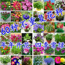 花种子四季播室内盆栽阳台开花植ha12组合套ks洒播花卉种子