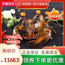 龙虾波ha顿鲜活特大ar龙波斯顿海鲜水产活虾1400-1600g