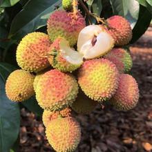 [hbhzl]荔枝新鲜水果当季现摘现发