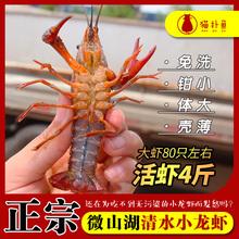 微山湖hc清水(小)活体az特大新鲜大虾养殖活虾4斤装