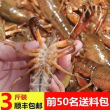 湖北新he(小)龙虾鲜活nr运活体(小)龙虾特大活虾包邮3斤淡水干净