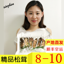【精品】新鲜速冻松茸 东北长白山野生hg15鲜蘑菇wo香格里拉