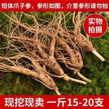 长白山hi鲜的参50ed北带土鲜的参15-20支一斤林下参包邮