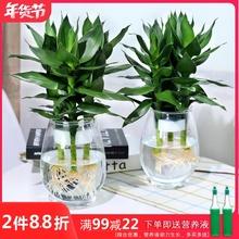 水培植物玻ho瓶观音竹富om花竹办公室桌面净化空气(小)盆栽