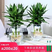 水培植hu玻璃瓶观音er竹莲花竹办公室桌面净化空气(小)盆栽