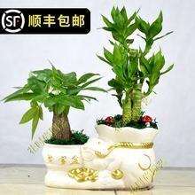 [huganzhou]发财树盆栽大植物室内办公