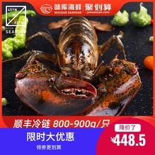 龙虾波hu顿鲜活特大ti龙波斯顿海鲜水产大活虾800-900g