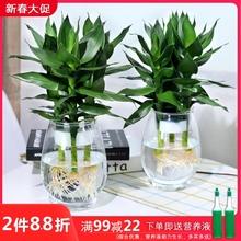 水培植hu玻璃瓶观音rd竹莲花竹办公室桌面净化空气(小)盆栽
