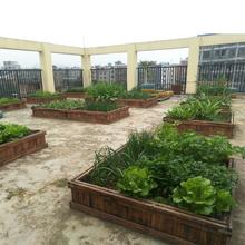 一米菜in槽楼顶屋顶or菜盆长方形防腐木花盆养殖箱包邮