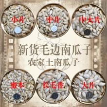 毛边生南瓜子(老品种土南