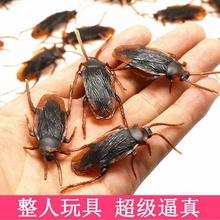 创意仿jz蟑螂搞怪玩lt节恶搞神器吓一跳整的昆虫逼真(小)强