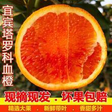 现摘发ka瑰新鲜橙子pa果红心塔罗科血8斤5斤手剥四川宜宾