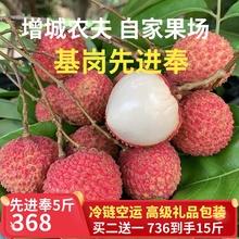 增城桂ka王超大果现ow新鲜水果5斤包邮挂绿胜过糯米糍