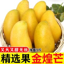 海南金煌中果ka斤大水仙芒en摘新鲜水果整箱批发10包邮果