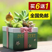 Zakkra创意可爱sd盆多肉植物花盆树脂个性多肉(小)花器盆栽包邮