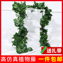 仿真葡ld叶树叶子绿xa绿植物水管道缠绕假花藤条藤蔓吊顶装饰