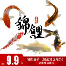 鱼苗观赏鱼冷水淡le5(小)型锦鲤rn鱼活体纯种锦鲤(小)鱼苗草金