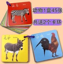 宝宝动li卡片图片识uf水果幼儿幼儿园套装读书认颜色新生大
