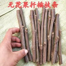 果树苗ll品种无花果zj条青皮红肉南北方种植盆栽地栽