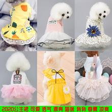夏季薄lo泰迪比熊博us犬猫咪宠物春夏装可爱公主裙子
