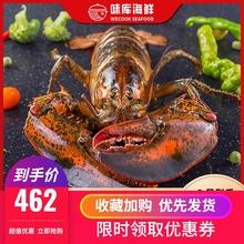 龙虾波lu顿鲜活特大ui龙波斯顿海鲜水产活虾450-550g*2
