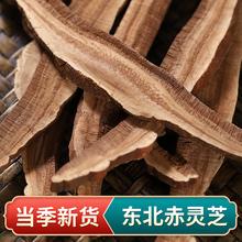 50克lu中心大片 in赤灵芝切片 可泡水泡酒煲汤