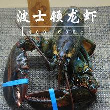 波士顿lu虾大波龙野in海鲜澳洲龙虾