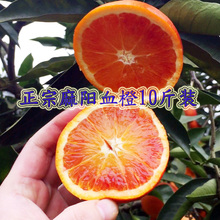 湖南麻lz冰糖橙正宗pw果10斤红心橙子红肉送礼盒雪橙应季