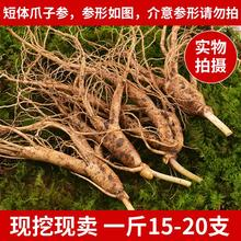 长白山ma鲜的参50ag北带土鲜的参15-20支一斤林下参包邮