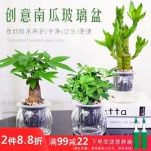 发财树mi萝办公室内su面(小)盆栽栀子花九里香好养水培植物花卉