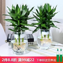 水培植mi玻璃瓶观音sy竹莲花竹办公室桌面净化空气(小)盆栽