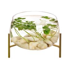创意玻mr鱼缸圆形金ti族箱乌龟缸(小)型客厅桌面懒的迷你水培缸