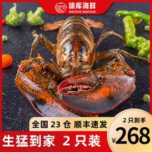 龙虾波mu顿鲜活特大yi龙波斯顿海鲜水产活虾450-550g*2