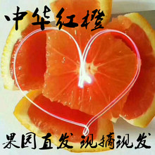 中华红橙新鲜甜橙子现摘现